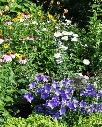 Corner of large Garden-Closeup-7-25-00