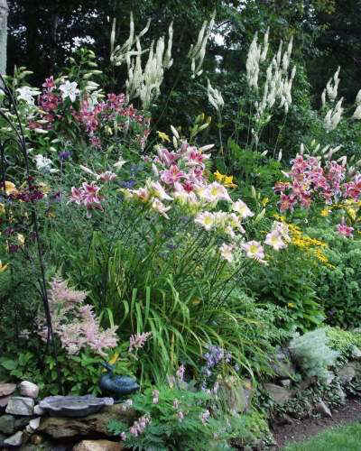 Large Garden with Stargazer Lilies 8-2-00